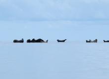 Seals on the stones