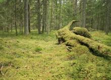 Scenery of Estonian Forest by Ueli Weber