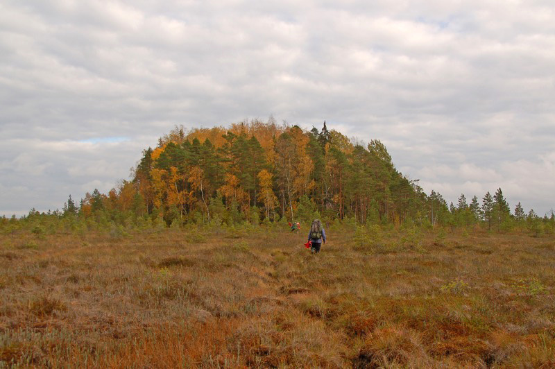 activity-nature-tour-to-estonian-wilderness-and-wildlife-bog-shoeing